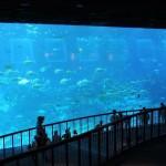 シンガポールの巨大水族館「シー・アクアリウム」に行ってきた