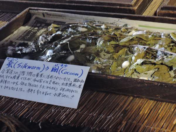 和田家の蚕と繭